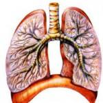 Заболевание органов дыхания